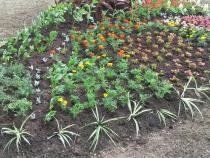 Dokončená výsadba květinových záhonů.