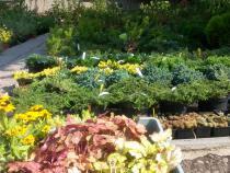 Zahajujeme podzimní prodej výpěstků ze zahradnictví
