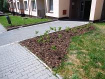 Sadové úpravy na sídlišti Štěpánov.