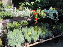 zahradnictví - jaro 2020