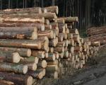 Výzva k podání návrhu na uzavření kupní smlouvy na 2 500 m3 dřevní hmoty, pro 2. čtvrtletí 2018.