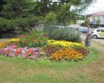 Květiny, stromy i keře vyžadují zálivku.